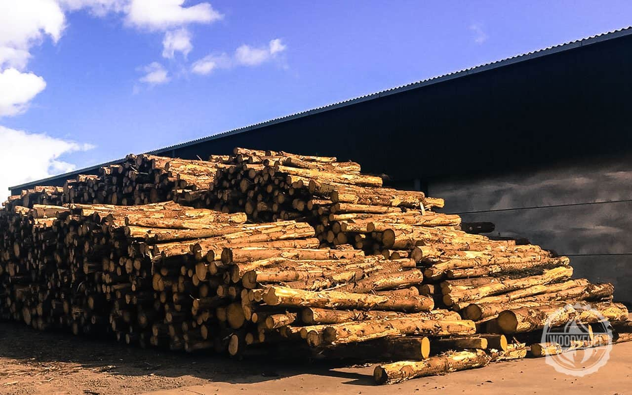 Woodyfuel supplies green energy fuel in the UK