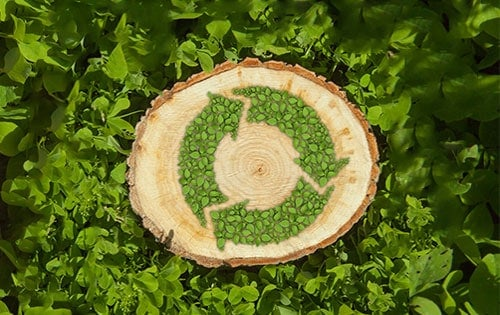 Environmental Aspects Of Biomass Energy And Wood Fuel Production