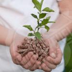 Eco friendly wood pellet from Alnwick