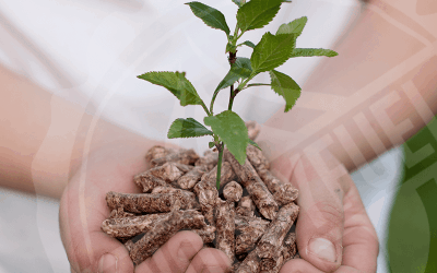 The advantage of premium wood pellet over economy pellet