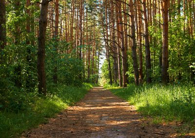 footpath-forest-fuels