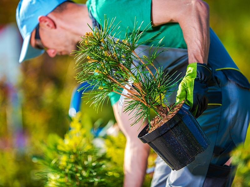 man planting a tree for sustainable forest management