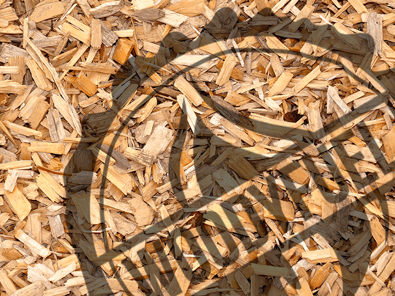 Forced dried wood chip