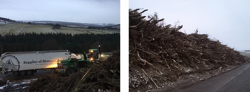 Brash removal site clearance