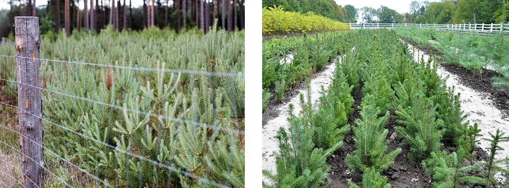 Forest fuels nursery