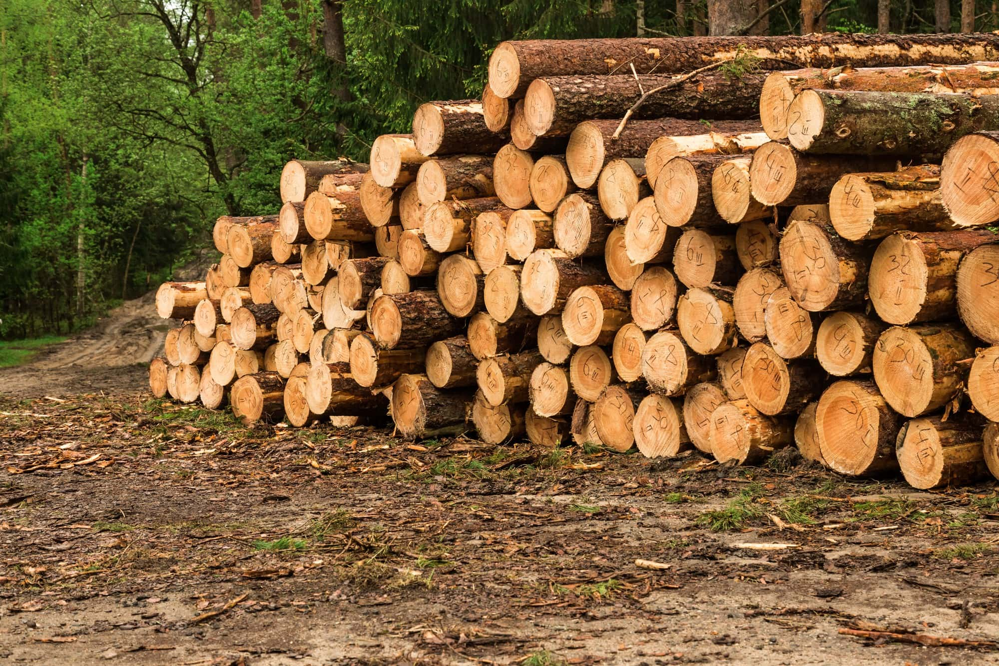 Woodyfuel chopped wood for sustainable cities and communities