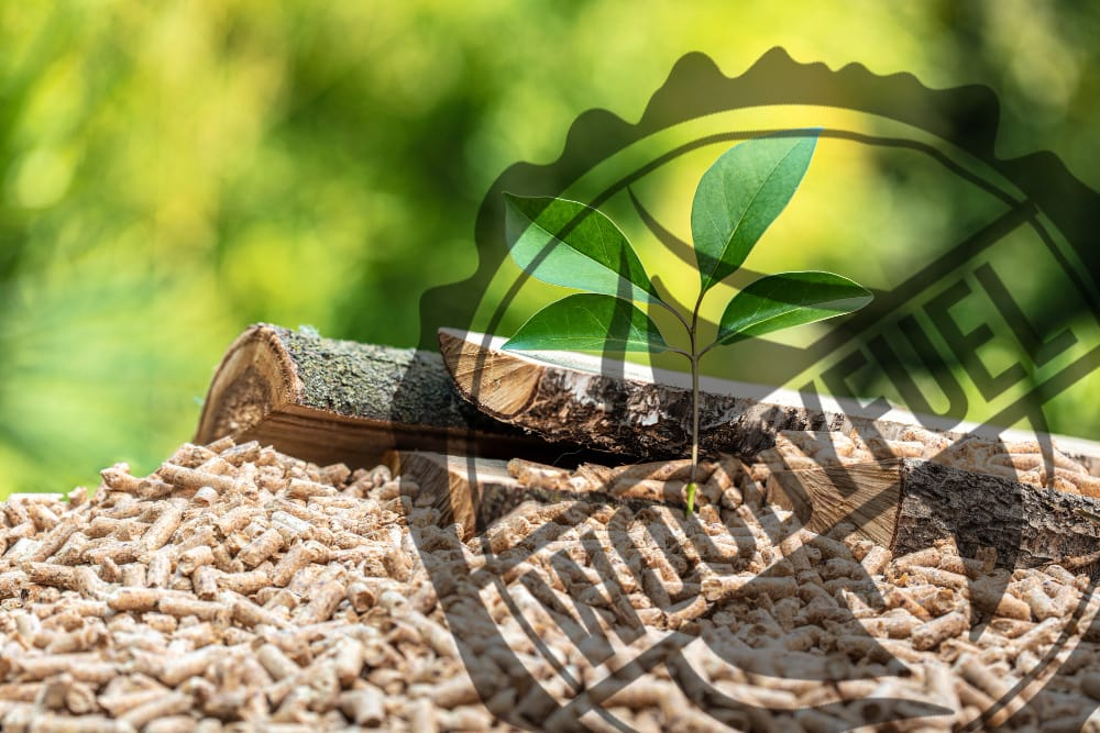 The Importance of Biomass Power in 2021